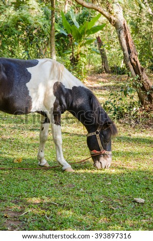 horse on outdoor meadow in sun light