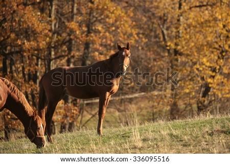 Horse on pasture. November, Poland. - stock photo