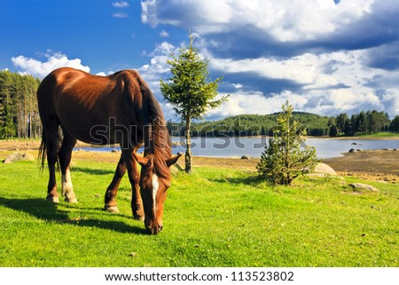 horse on the field near mountain lake - stock photo