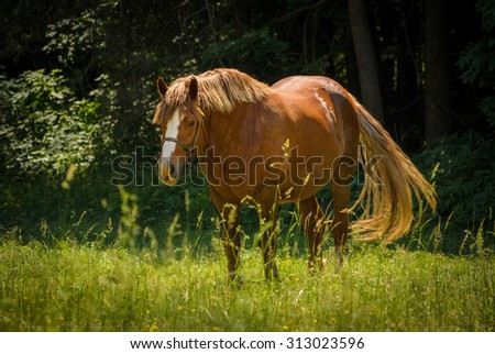 horse on the green meadow wagging her tail - stock photo