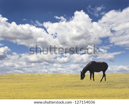 Horse on the hill against blue background