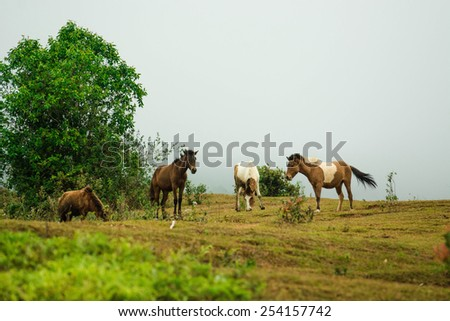horse on the hill with fog background - stock photo