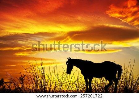 horse on the meadow at sunset - stock photo