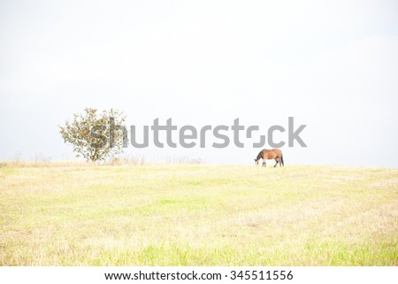 Horse pastures at the green grass meadow. High key. - stock photo