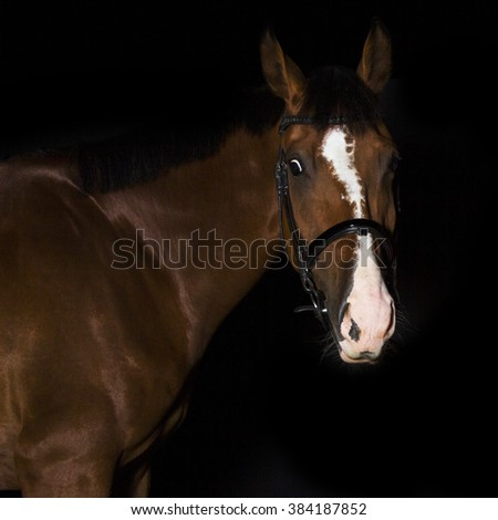 Horse photo with black background