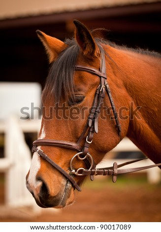 Horse portrait in an arena - stock photo