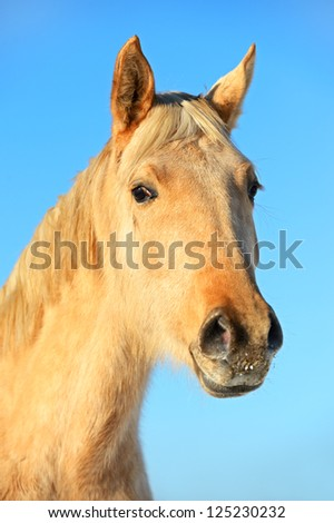 Horse portrait on a background of blue sky