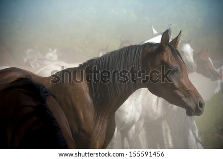 Horse portrait on a farm in summer  - stock photo