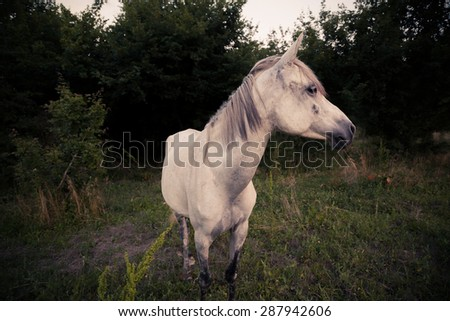 Horse - processed colors, vignetting effect - stock photo