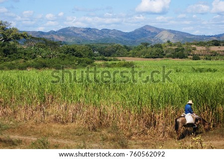 Horse Rider And Sugar Cane Plantation Valle De Los Ingenios Landscape Near Trinidad Cuba