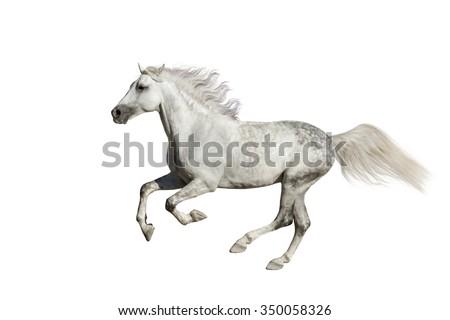Horse run isolated on white background - stock photo