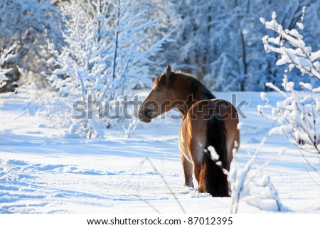 Horse running in the woods in winter - stock photo