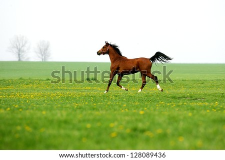 Horse running on meadow 02 - stock photo