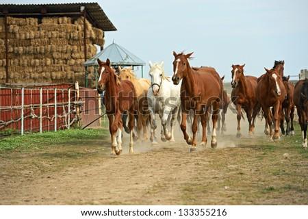 Horse running on the field - stock photo