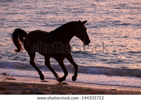 Horse running through water - stock photo
