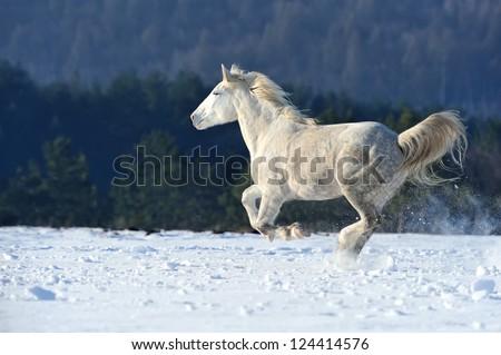 Horse runs gallop on the winter field - stock photo