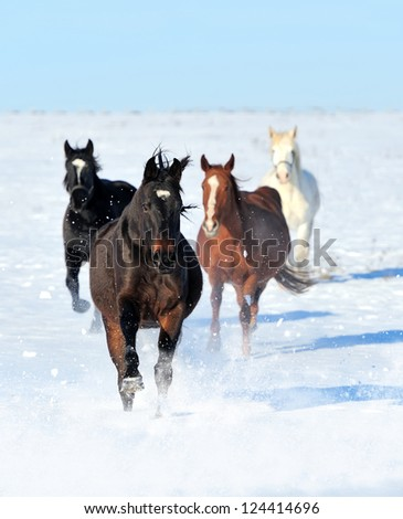 Horse runs gallop on the winter field - stock photo