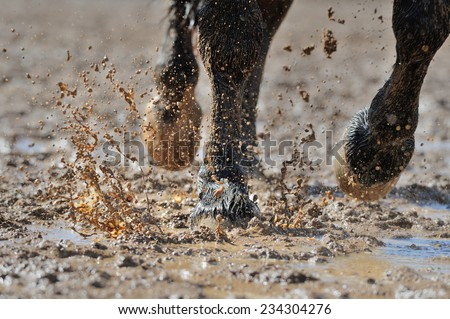 Horse's legs in the dirty water - stock photo