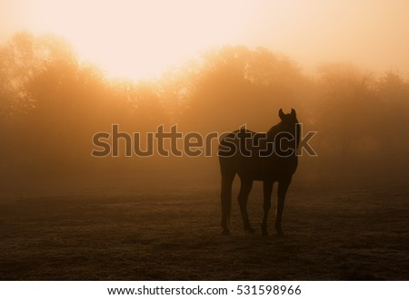 Horse silhouette in heavy fog at sunrise