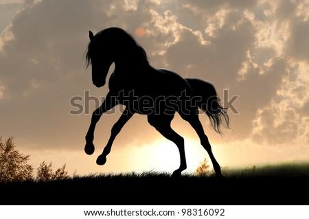 horse silhouette in the sunrise - stock photo