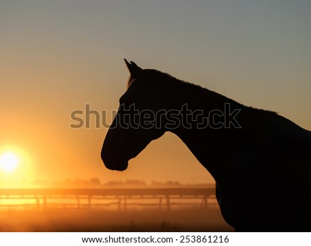 Horse silhouette on a background of dawn. Portrait of a horse
