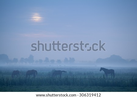 horse silhouette on pasture in dusk - stock photo
