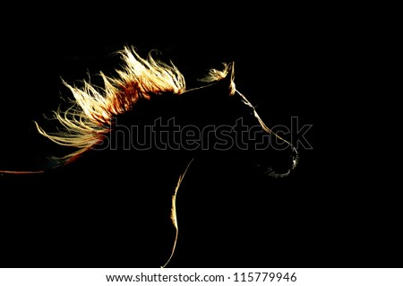 Horse silhouette on the dark background - stock photo