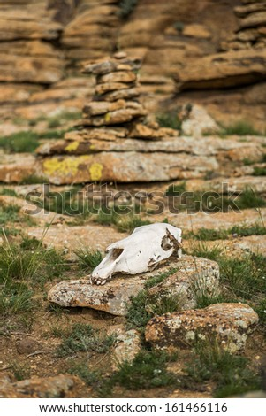horse skull at an Ovoo, Mongolia - stock photo
