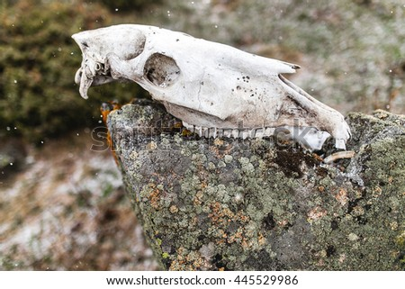 Horse skull on a rock in mountains. Danger sign to travelers - stock photo