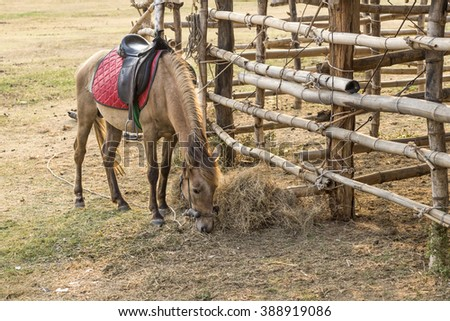 Horse standing beside the stables - stock photo