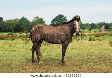 Horse standing in a field.