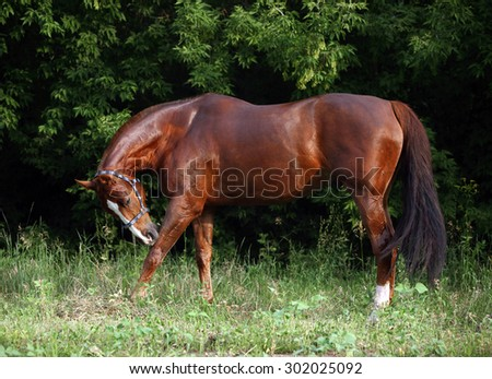 Horse standing in evening forest - stock photo