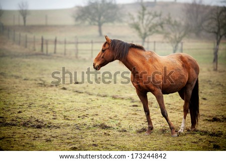 HORSE STANDING IN THE FIELD ALONE - stock photo