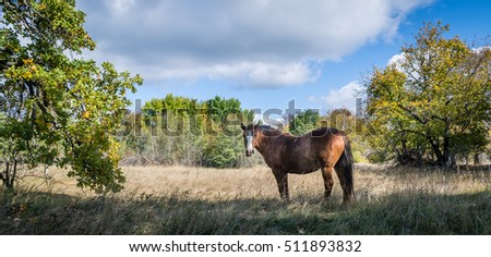 Horse standing on field