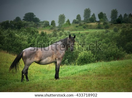 Horse standing on the field in rainy day - stock photo