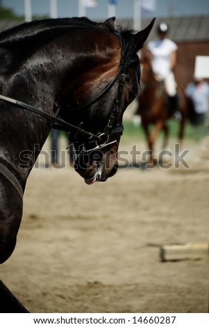 Horse theme: jockeys, horse races, speed. - stock photo