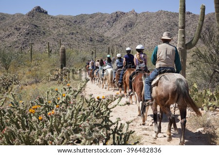 Horse tour, guided horseback riding, in the Sonoran Desert outside of Phoenix, Arizona with Saguaro Cacti in Spring - stock photo