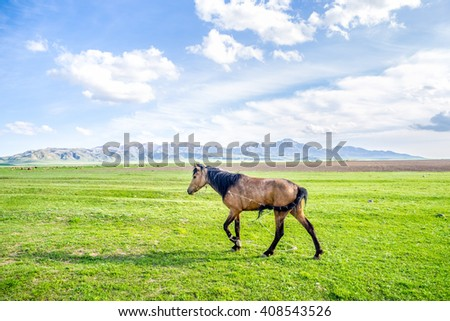 Horse walking on green field at the sunny day