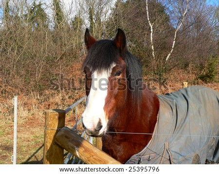 horse wearing a jacket standing in a field - stock photo