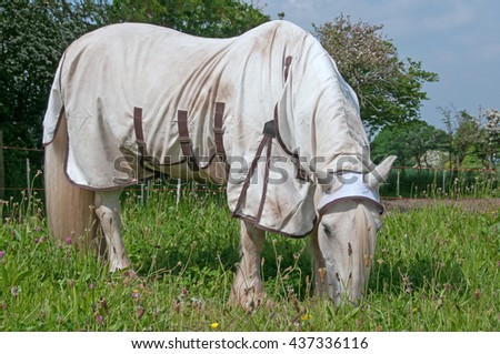 Horse wearing a rug for protection against insects