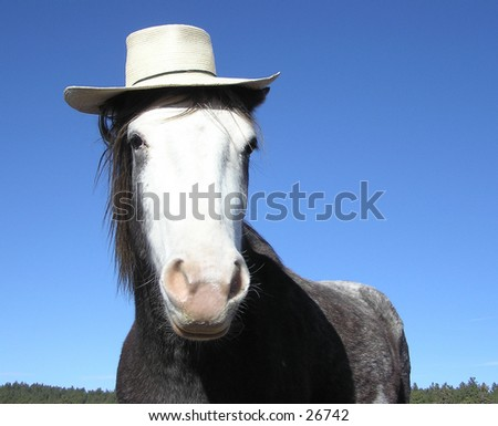 Horse wearing straw hat - stock photo