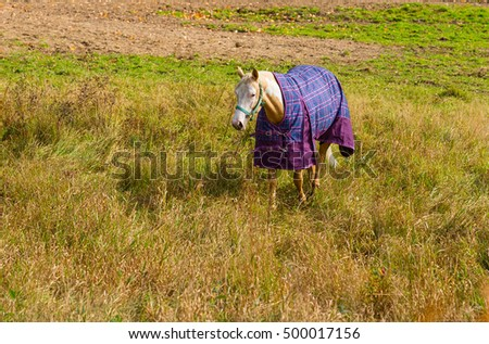 Horse with a blanket