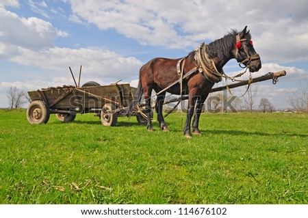 Horse with a cart - stock photo