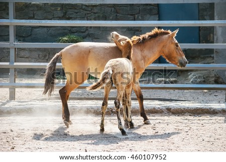 Horse with a foal on the farm paddock - stock photo