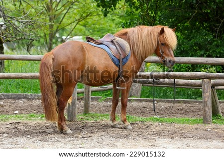 horse with a long haired