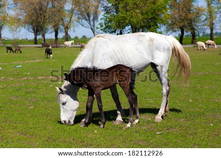 Horse with foal on the farm - stock photo
