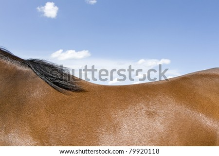 Horseback, horse with blue sky. - stock photo