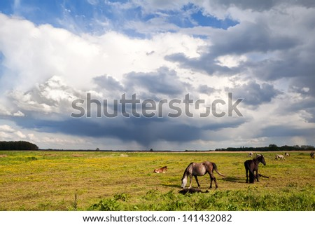 horses and little foals on pasture grazing and beautitul sly - stock photo
