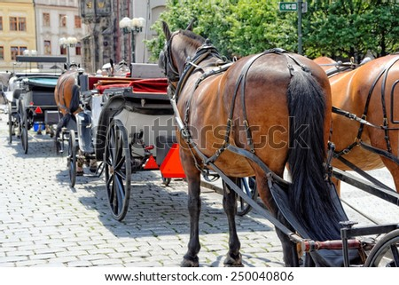 Horses are harnessed to carts for driving tourists In Prague Old Town Square. Czech Republic. - stock photo