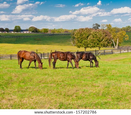 Horses at horse farm. Country landscape. - stock photo